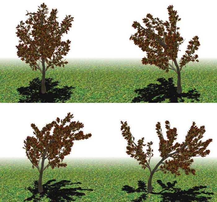 Simplify, simplify:  An accurate digital model with fewer parameters makes it possible to simulate in real time how a tree moves when subjected to wind.