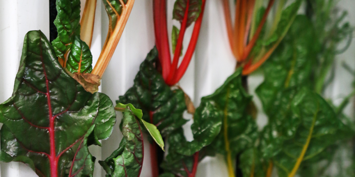 How to grow four tons of food a year in a metal box without sunlight