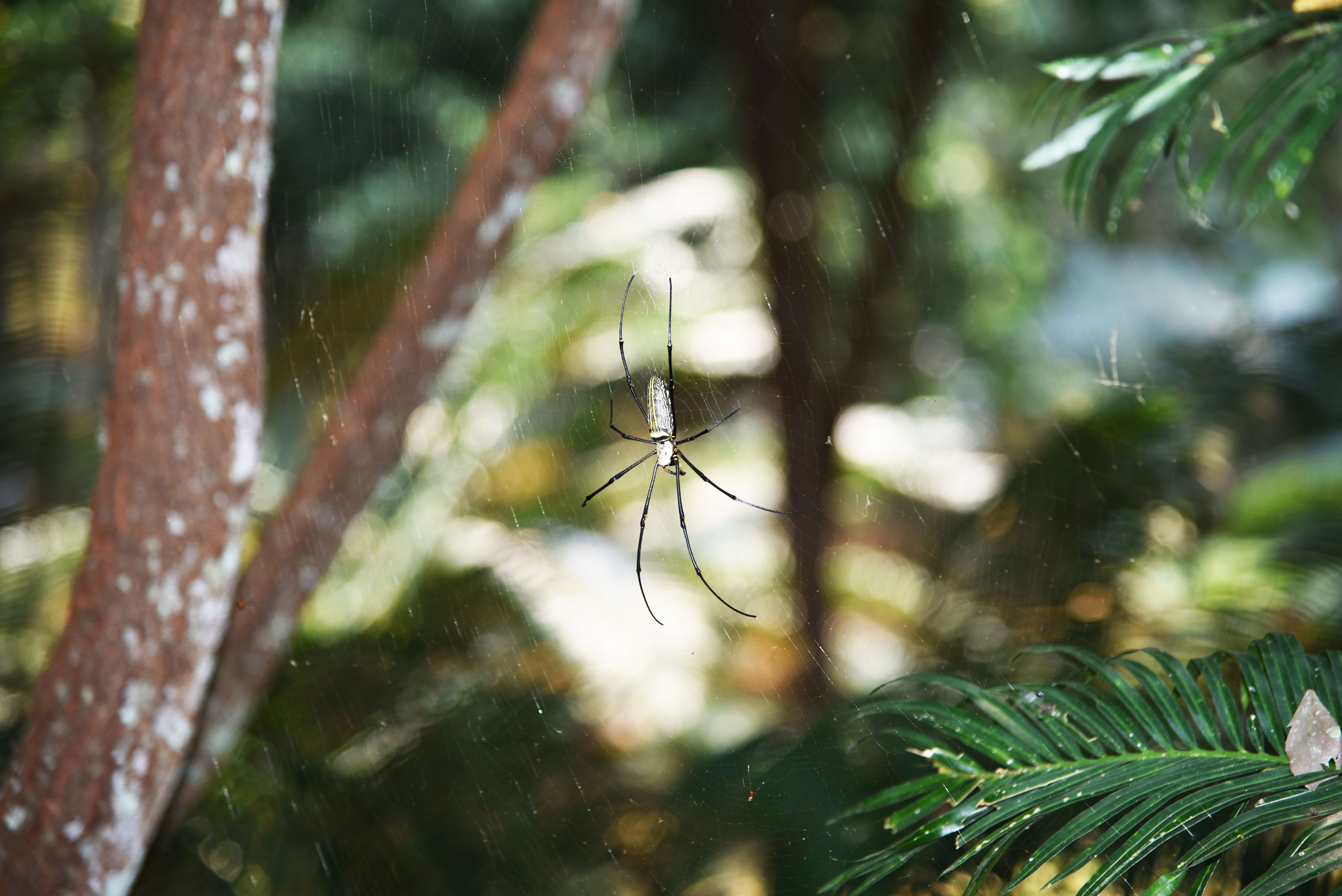 Photo of spider