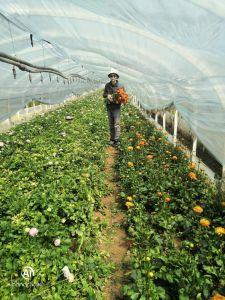 Li Jinxing in his flower farm.