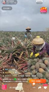 A screenshot from Wei Wei's live-stream, featuring a pineapple farm.