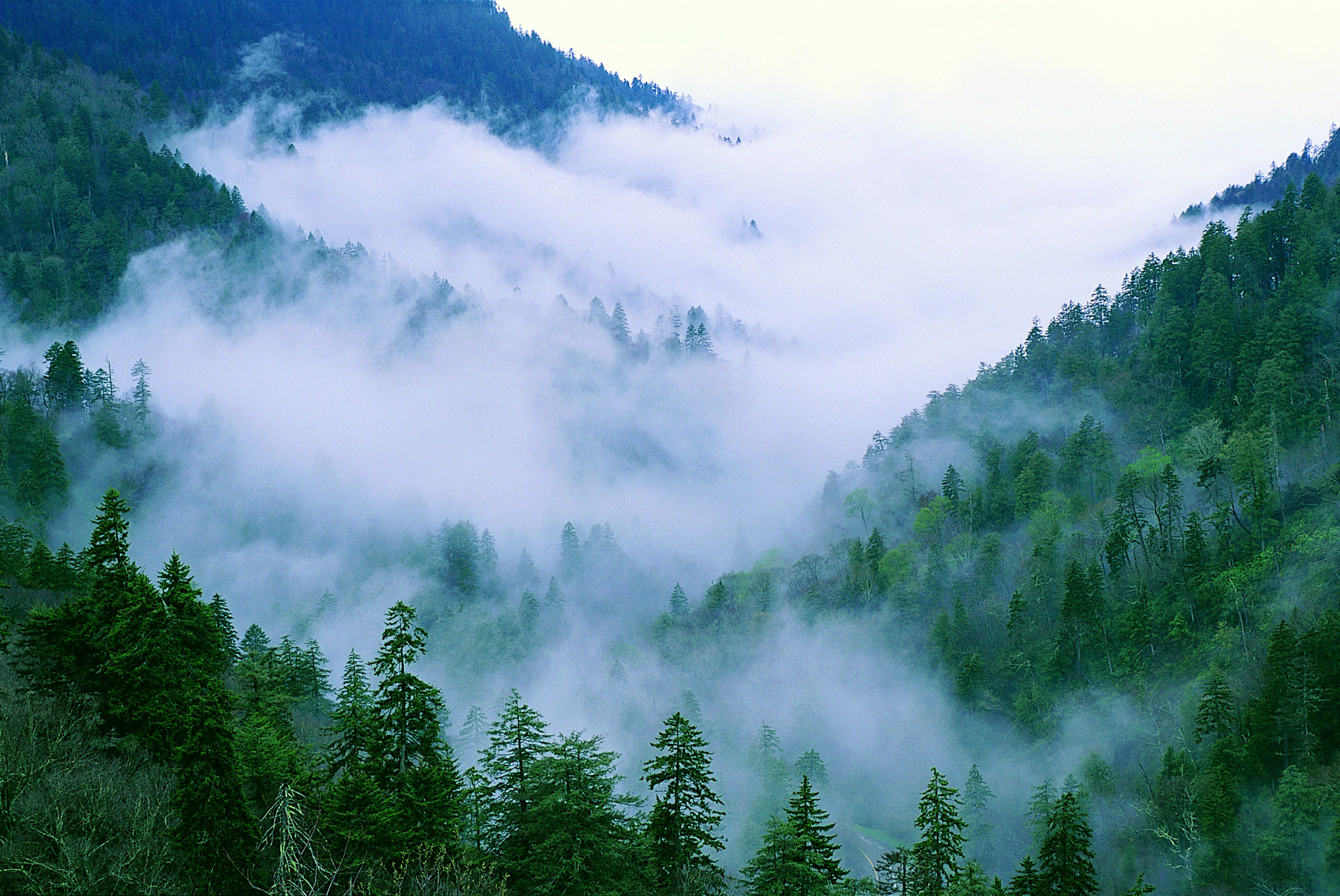 smoky mountain forest