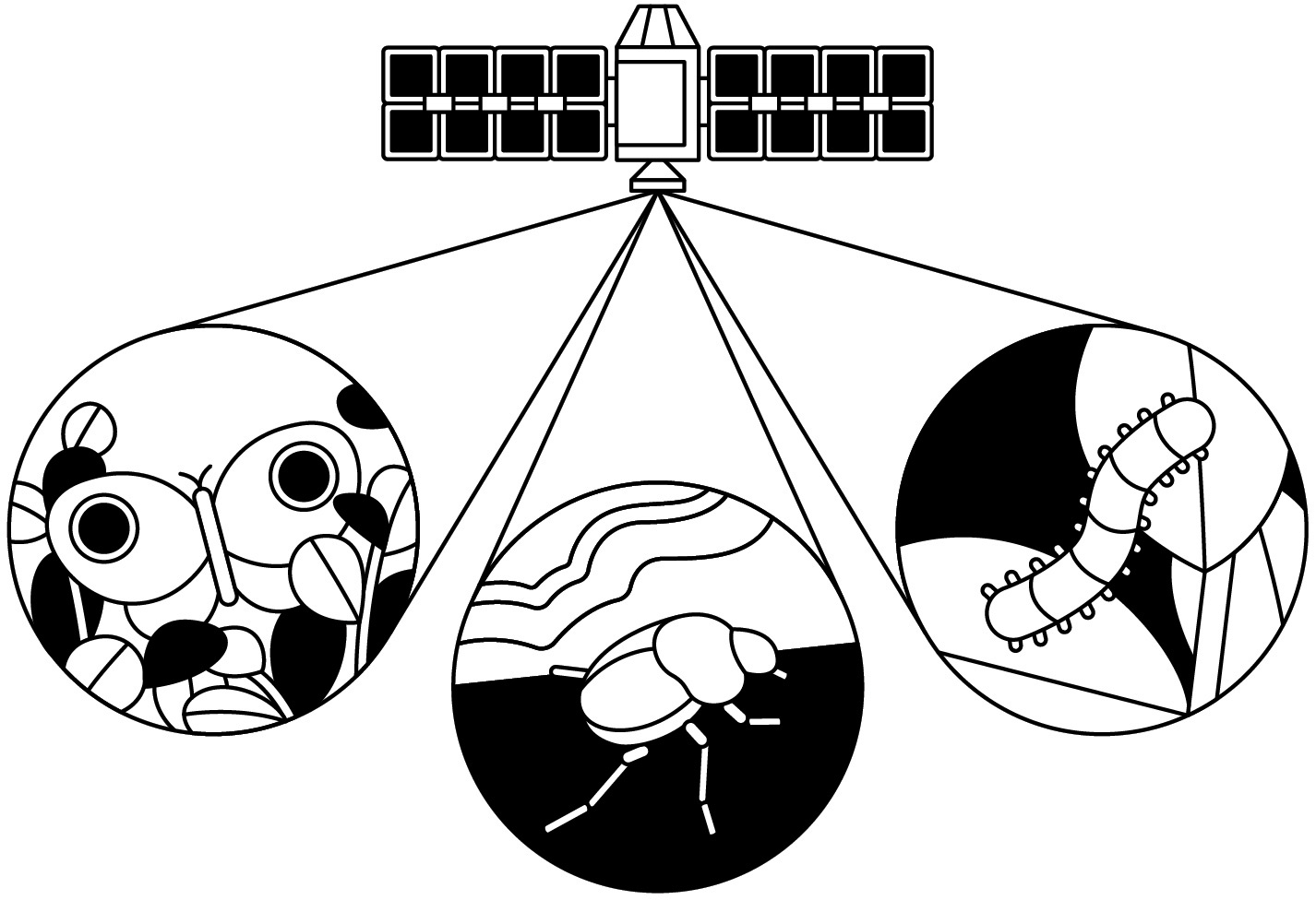 satellite tracking insects
