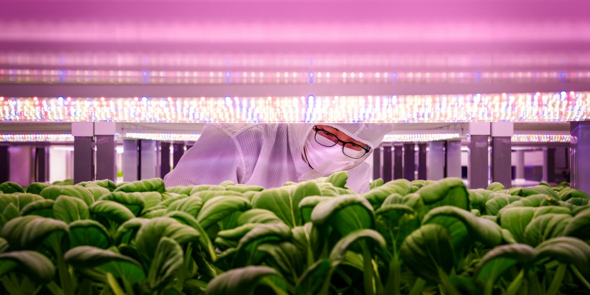 Inside Singapore's huge bet on vertical farming