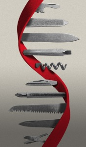 gene vaccines