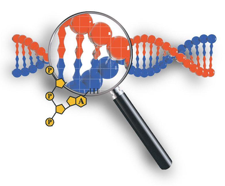 نقطه اطلاعات ژنتیکی