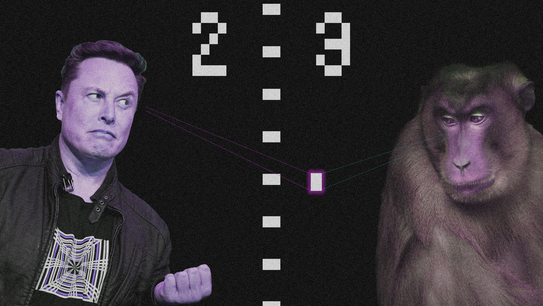 Elon plays pong vs monkey